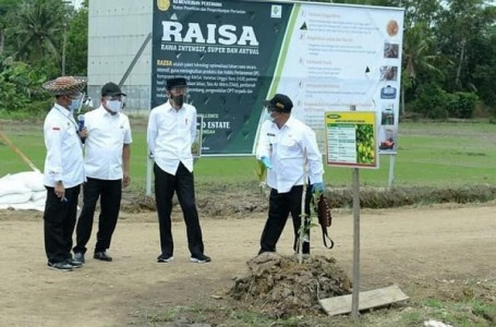 Pengembangan Food Estate di Kalteng Gunakan Teknologi Modern