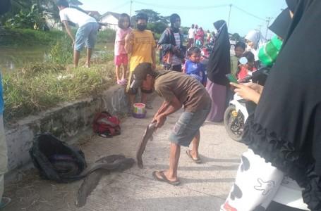 Banjir Surut, Warga di Kabupaten Bekasi Panen Lele Berukuran Jumbo